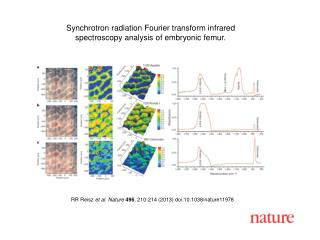 Synchrotron radiation Fourier transform infrared spectroscopy analysis of embryonic femur.