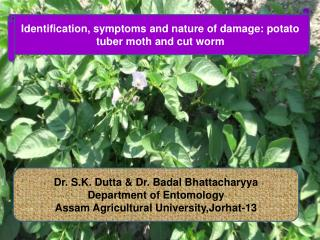 Dr. S.K. Dutta & Dr. Badal Bhattacharyya Department of Entomology
