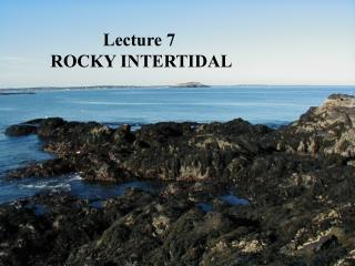 Lecture 7  ROCKY INTERTIDAL