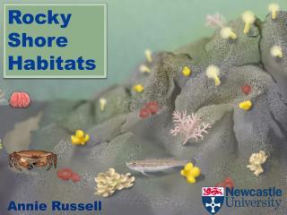 Rocky Shore Habitats