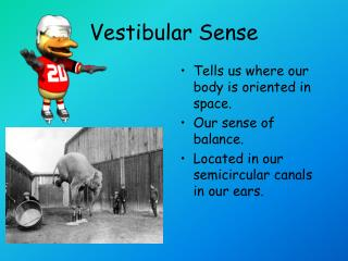 Vestibular Sense