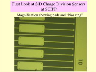 """Magnification showing pads and """"bias ring"""""""