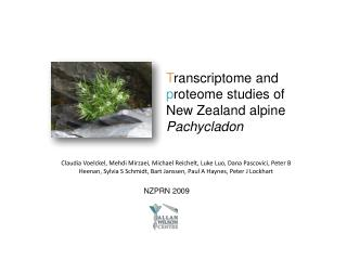 T ranscriptome  and  p roteome studies of New Zealand alpine  Pachycladon