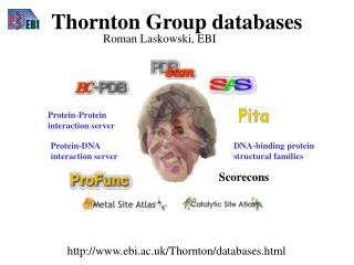 Thornton Group databases