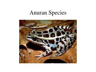 Anuran Species