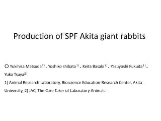 Production of SPF Akita giant rabbits