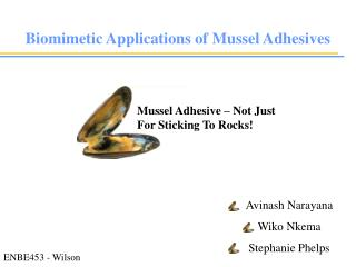 Mussel Adhesive � Not Just For Sticking To Rocks!
