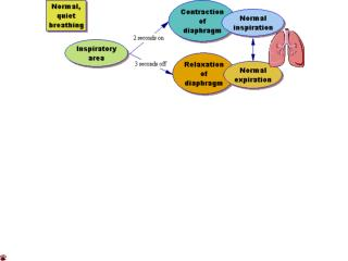 Regulation of breathing