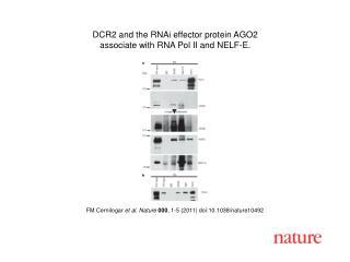 FM Cernilogar  et al .  Nature 000 ,  1 - 5  (2011) doi:10.1038/nature10492