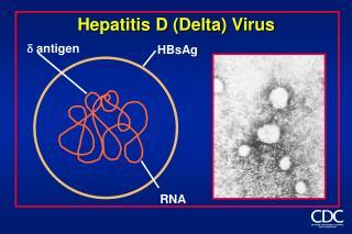 Hepatitis D (Delta) Virus