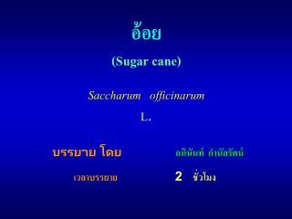 อ้อย (Sugar cane)