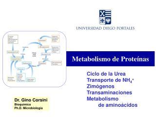Metabolismo de Prote�nas