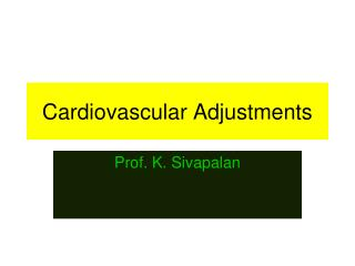 Cardiovascular Adjustments