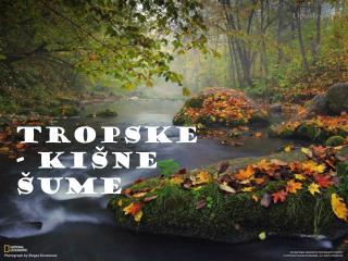 TROPSKE - ki�ne  �UME