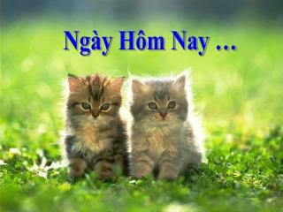 Ngày Hôm Nay …