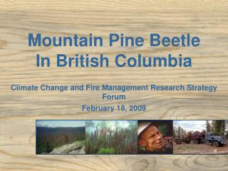 Mountain Pine Beetle In British Columbia
