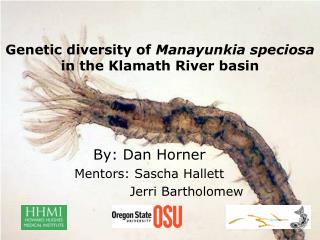 Genetic diversity of  Manayunkia speciosa in the Klamath River basin