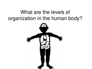 What are the levels of organization in the human body?