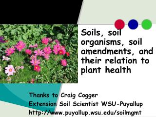 Soils, soil organisms, soil amendments, and their relation to plant health