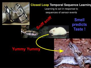 Closed Loop  Temporal Sequence Learning Learning to act in response to sequences of sensor events