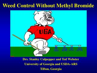 Weed Control Without Methyl Bromide