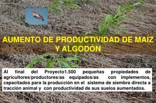 AUMENTO DE PRODUCTIVIDAD DE MAÍZ Y ALGODÓN