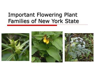 Important Flowering Plant Families of New York State