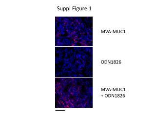 MVA-MUC1