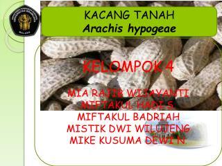 KACANG TANAH Arachis hypogeae