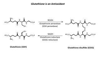 Glutathione is an Antioxidant
