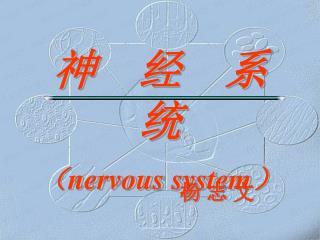 神  经  系  统 ( nervous system )