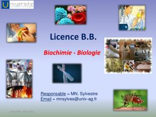 Licence B.B.