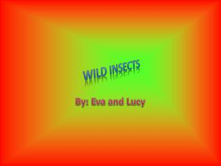 Wild Insects