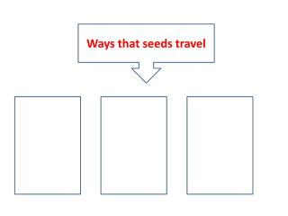 Ways that seeds travel