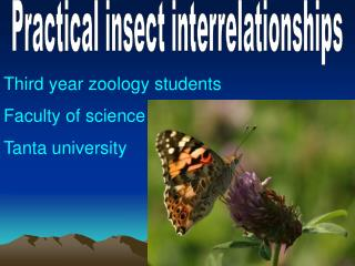 Practical insect interrelationships