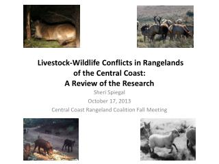 Livestock-Wildlife Conflicts in Rangelands  of  the Central Coast:  A Review of the Research