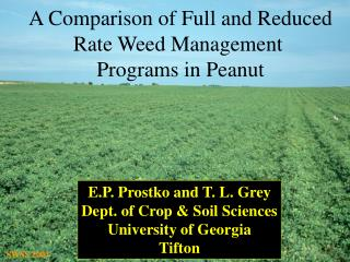 A Comparison of Full and Reduced Rate Weed Management  Programs in Peanut