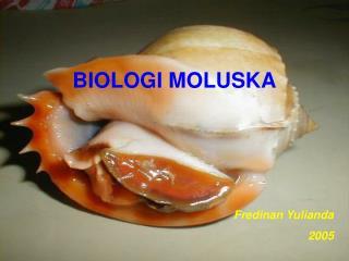 BIOLOGI MOLUSKA