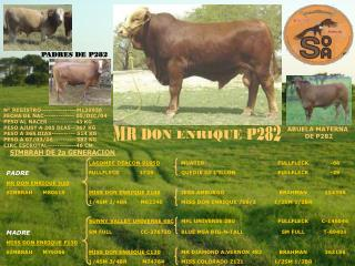 MR DON ENRIQUE P282