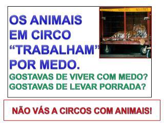 OS ANIMAIS  EM CIRCO  �TRABALHAM�  POR MEDO. GOSTAVAS DE VIVER COM MEDO?