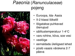 Paeonia ( Ranunculaceae )  pojeng