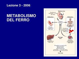 Lezione 3 - 2006 METABOLISMO  DEL FERRO
