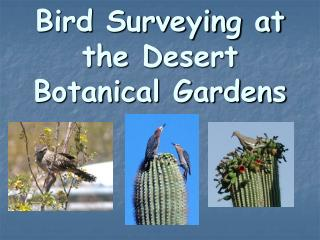 Bird Surveying at the Desert Botanical Gardens