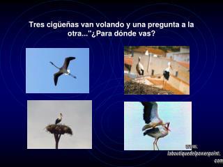 Tres cigüeñas van volando y una pregunta a la otra...