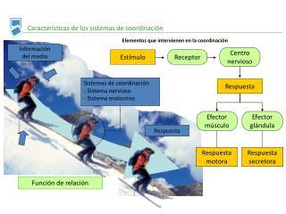 Caracter�sticas de los sistemas de coordinaci�n