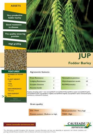 JUP Fodder Barley