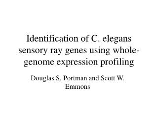 Identification of C. elegans sensory ray genes using whole-genome expression profiling