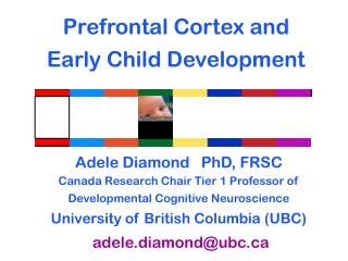 Prefrontal Cortex and Early Child Development