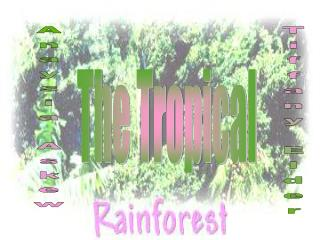 The Tropical Rainforest