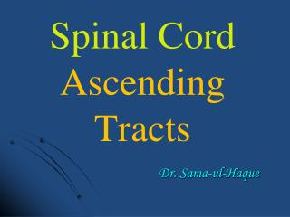 Spinal Cord Ascending Tracts